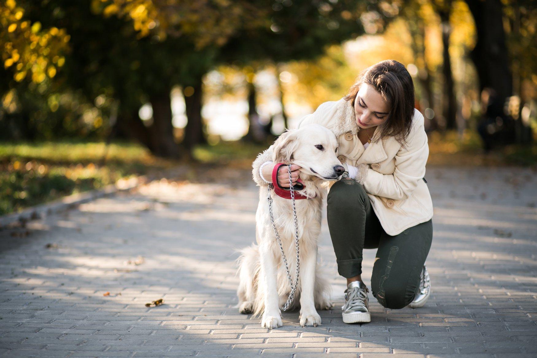 Rete Per Gatti Condominio treviso, nasce l'ufficio per cani e gatti: servizi e aiuti